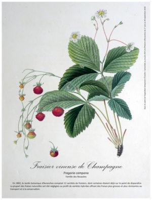 Belles planches botaniques anciennes